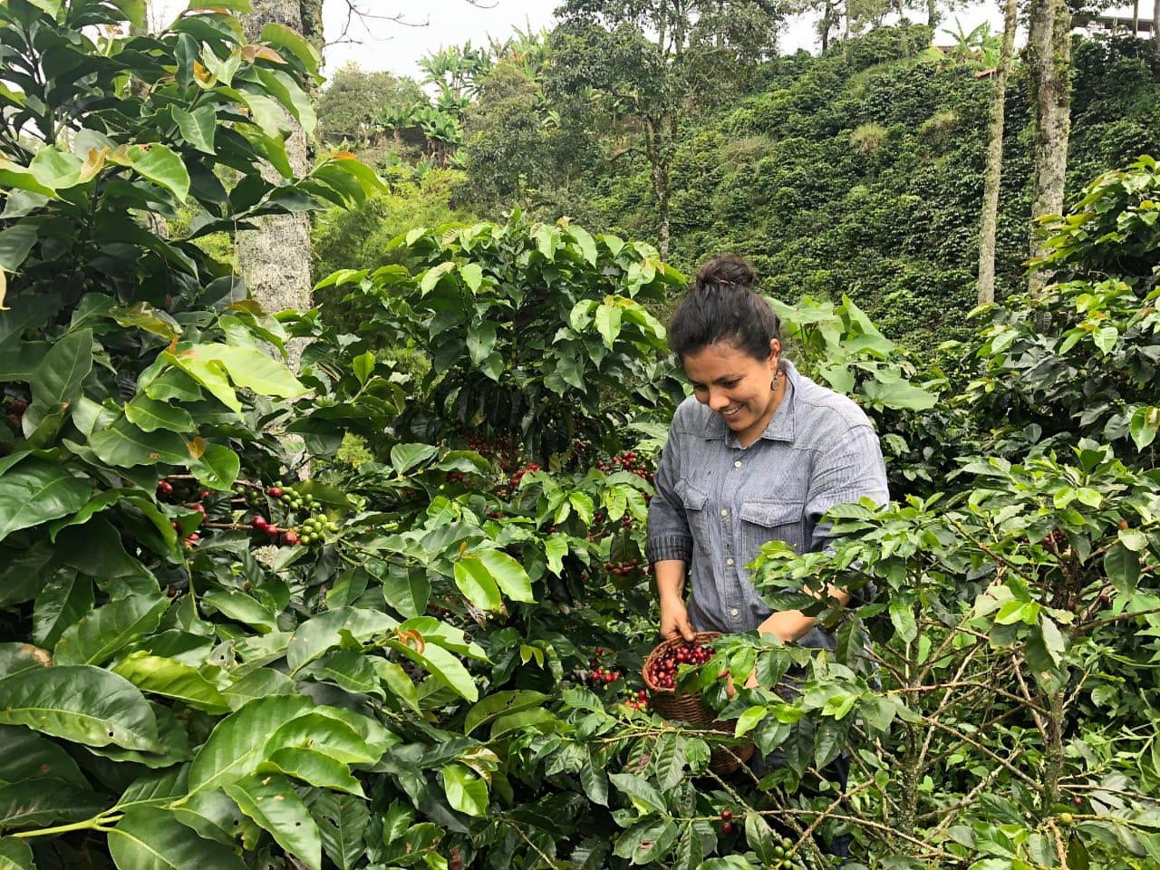 Tours y recorridos en Medellín y en finca cafetera Santa Bárbara Antioquia