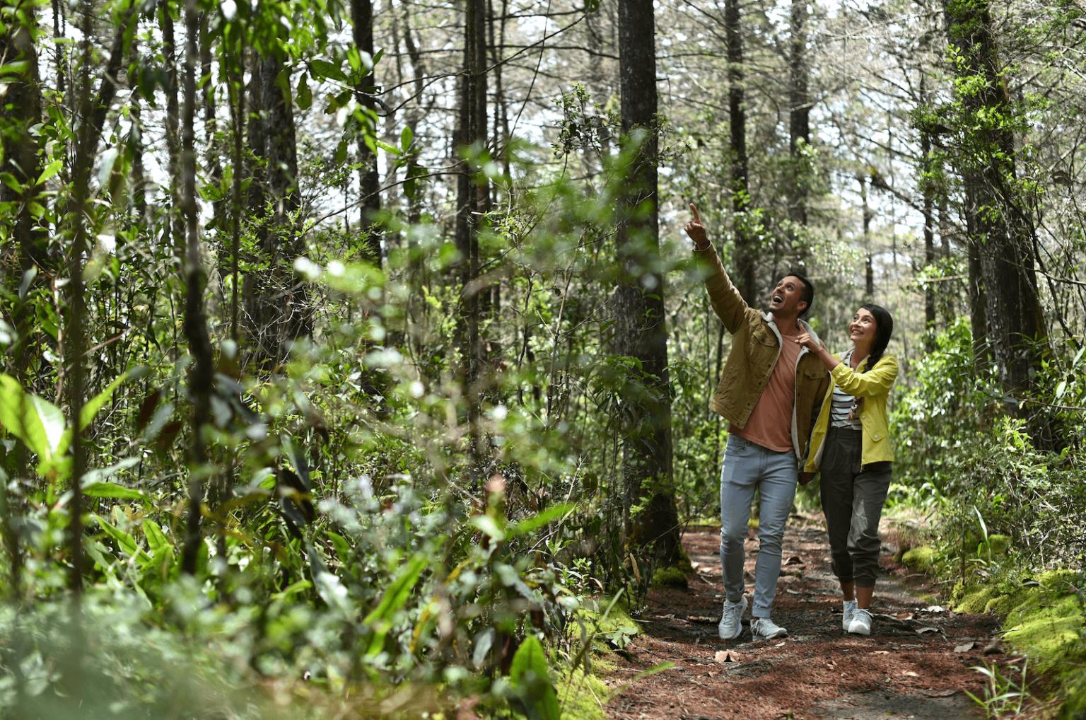 Tours y recorridos en Medellín y el Parque Arví